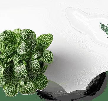 Plante saint tropez, port grimaud